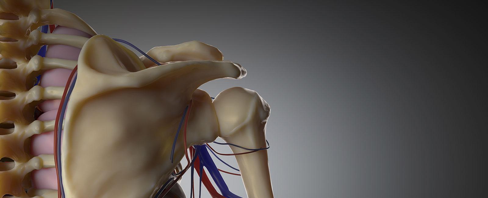 exposición anatomed