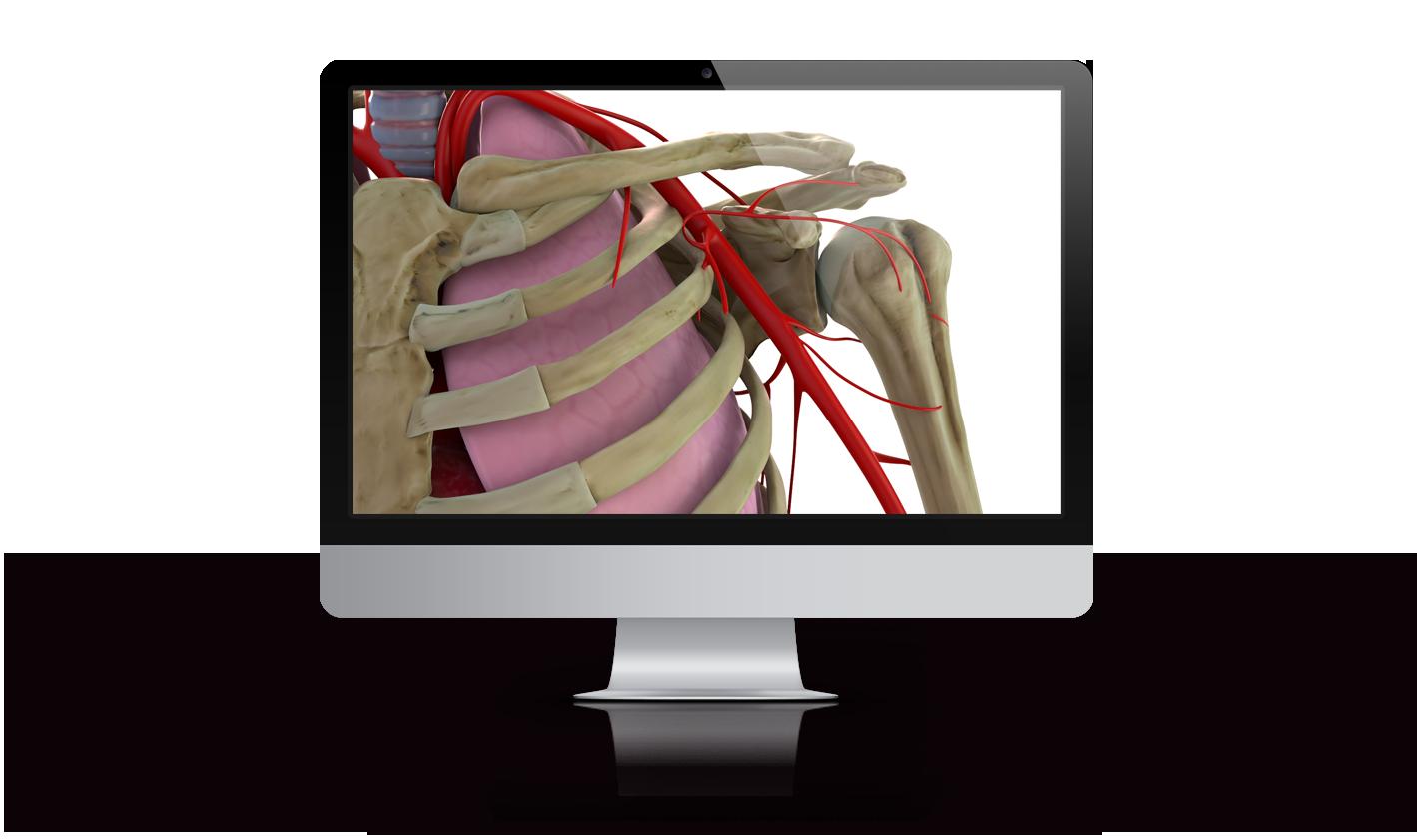 Banco de imagen médica 3D hombro