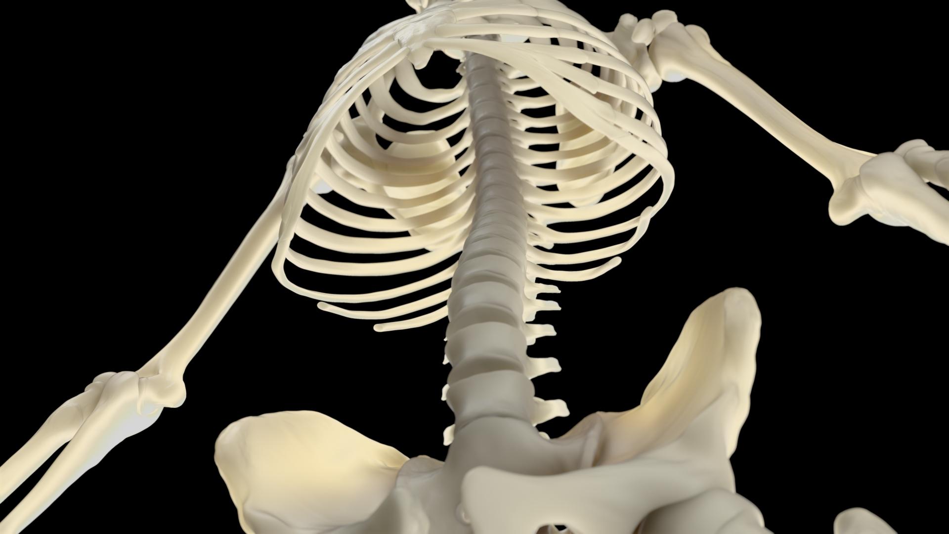 Human Atlas interactivo 3D de Anatomía Inneva Pharma
