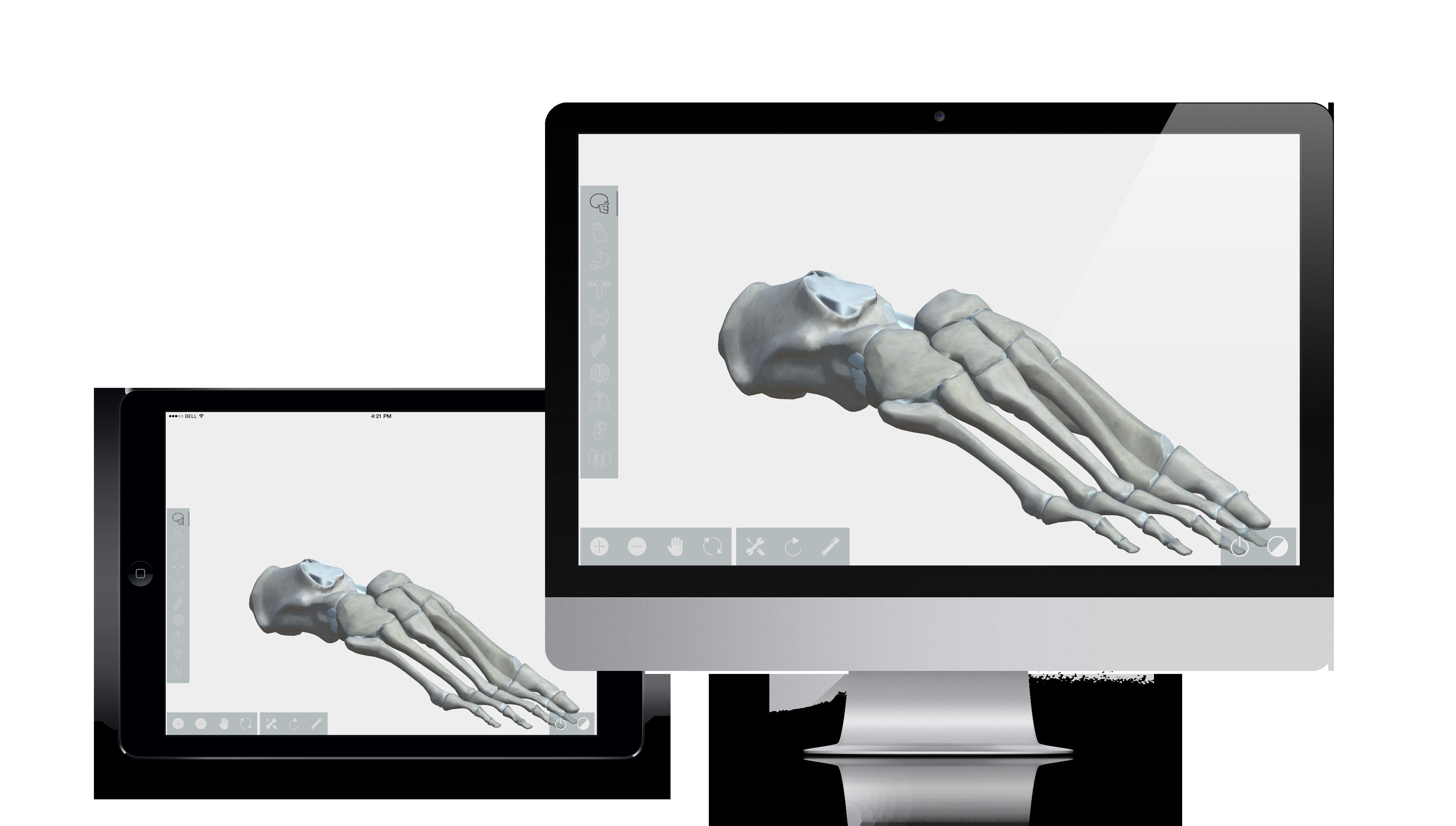 Human 3D atlas interactivo Anatomía Inneva Pharma