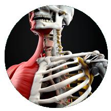 banco imagen médica 3D