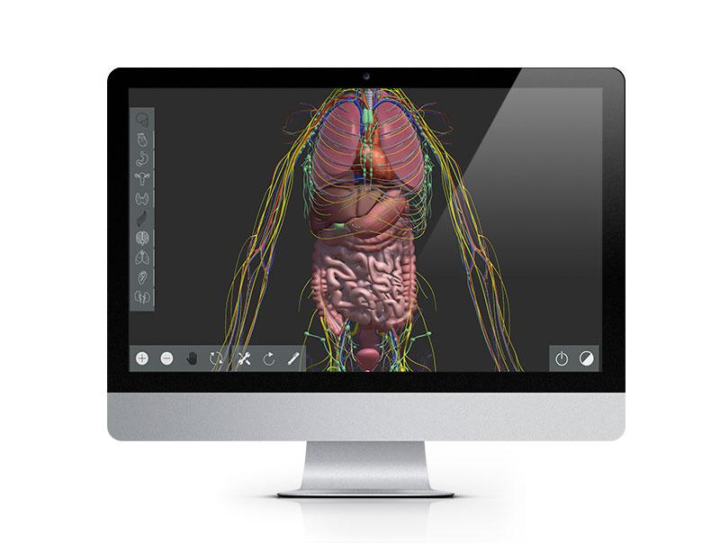 interactivos anatomia